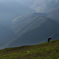Horse in the mountains in Gilan province