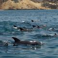Qeshm island, Persian Gulf - dolphins and desert
