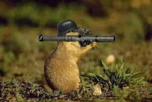 animal-with-gun-funny-war.jpg