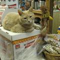 Egy macska a polgármesetere egy északalaszkai városkának.