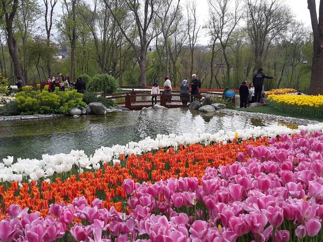 JÁTÉK! Isztambuli tulipánfesztivál