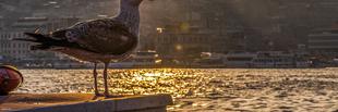 Képzeletbeli utazás Isztambulba...