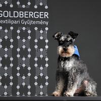 Magyarország első kutyabarát múzeuma
