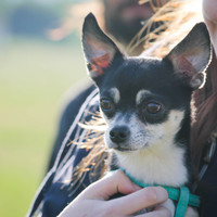 Tesztelve: szuper kutyabarát szálláshelyek nyárra