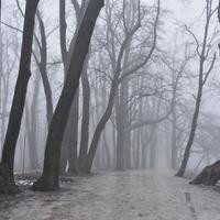 Normafa elveszett a ködben