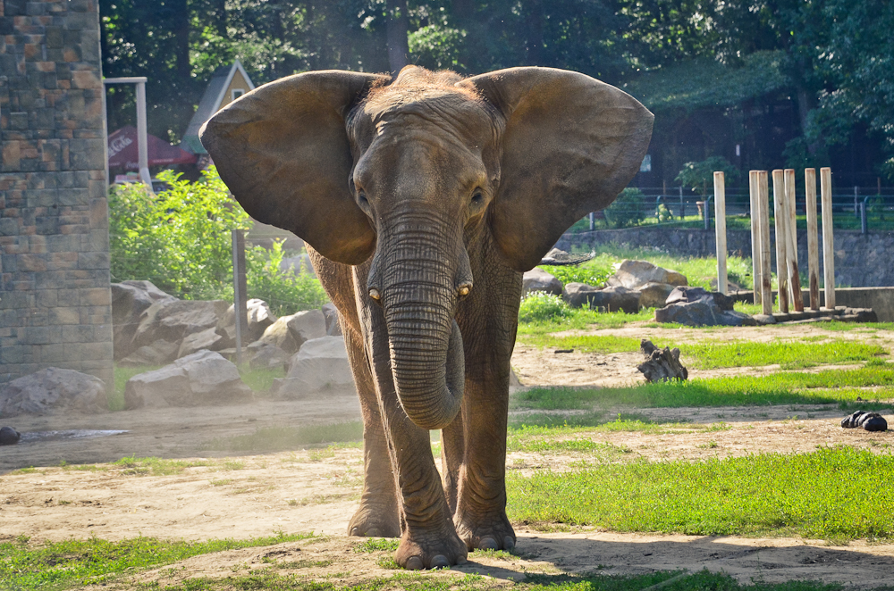 _dsc6354_afrikai_elefant.jpg