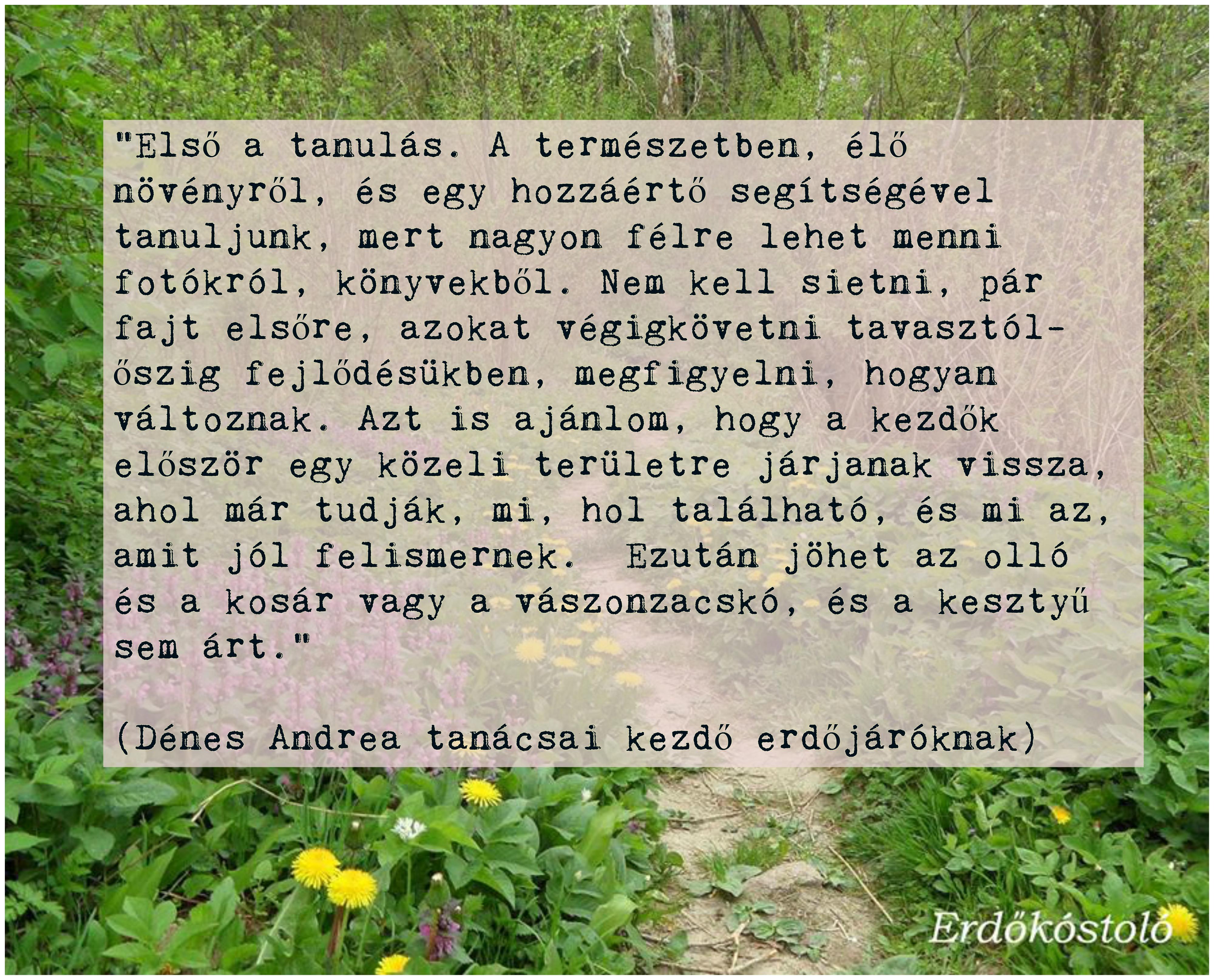 elso_a_tanulas.jpg