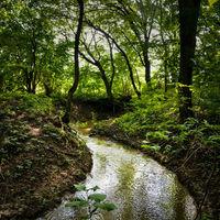 Miért nem él orrszarvú a Balaton-felvidéken?