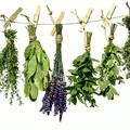 Balatoni gyógynövénytúrák és csipkebogyó piknik
