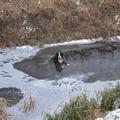 Napi cukiság: ezért menj óvatosan a jégre!