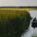 10 dolog, amit a Tisza-tóról tudnod kell