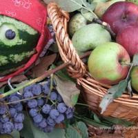 Gömöri Gyümölcsfesztivál