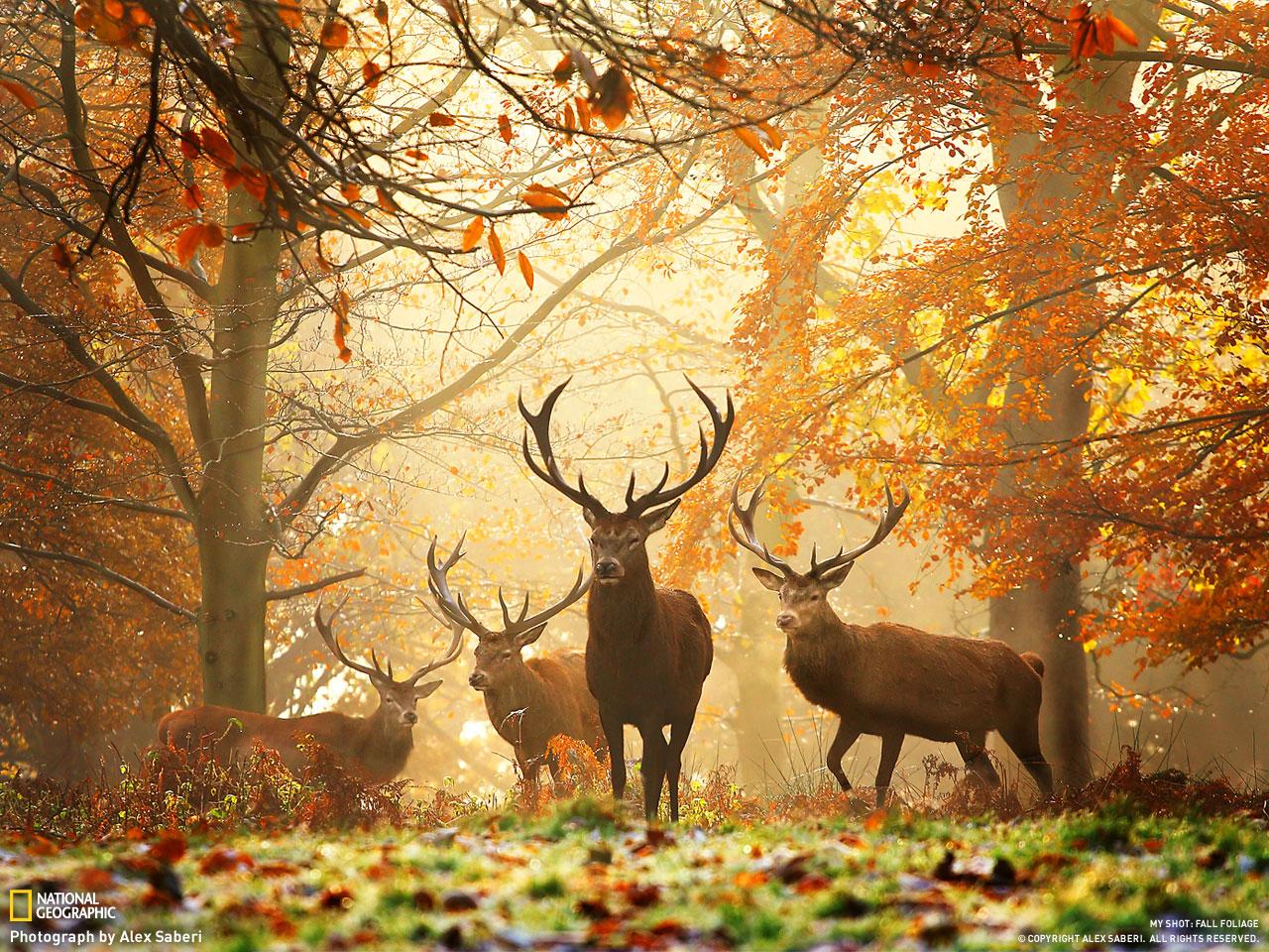 ősz.jpg