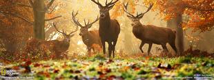 Ősz Ivádon
