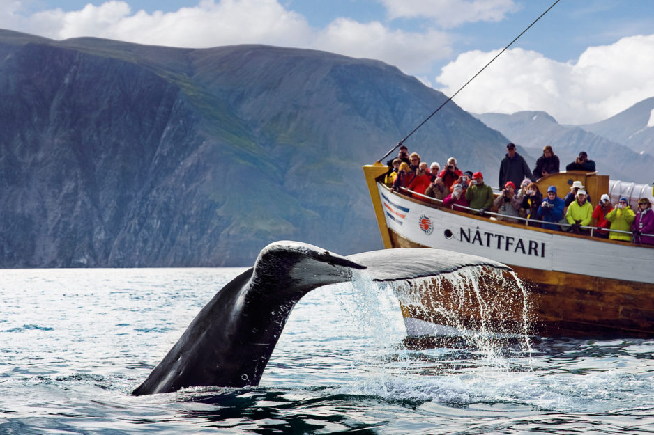 humpback-whale-fluke-in-front-of-nattfari-938x625.jpg