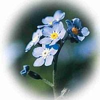 Nemes Nagy Ágnes: A gondolj-rám-virág