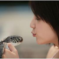 Masami és a teknős
