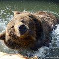 Medencés lakosztályt kapott az Állatkert új lakója, Balu