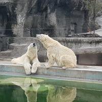 Az Állatkert nem alszik téli álmot, tele van látnivalóval