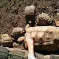 Indián nyár az Állatkertben: teknős- és muflonsimogató túra