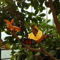 Karnyújtásnyira több száz színpomás pillangó