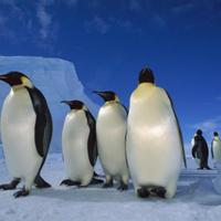 2011 decemberében jön a Jégkorszak