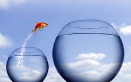 ambitious-goldfish.jpg