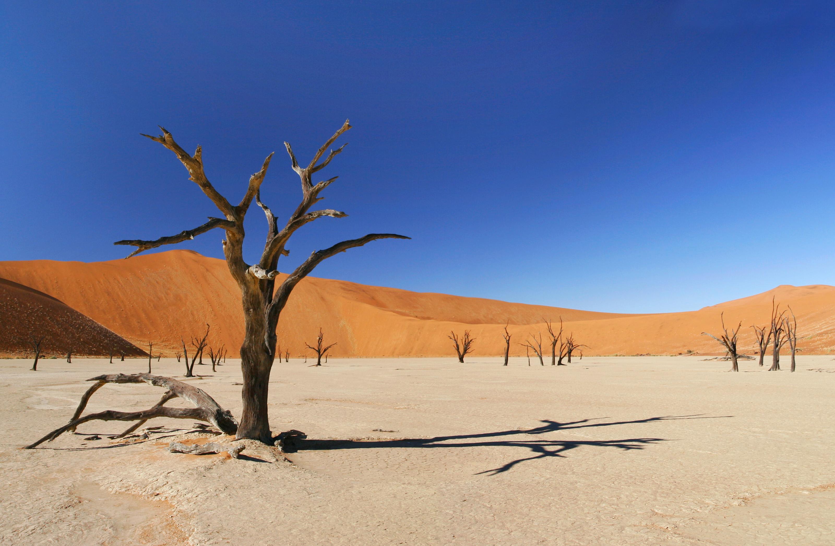 sivatagi_szaraz_fa.jpg