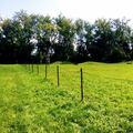 Kutyafuttató kerítésének felújítása a cél