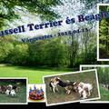Felhívás: 25. Russell Terrier és Beagle túra