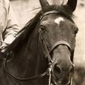 Kitüntették Harcost, az 1. világháborús lovat
