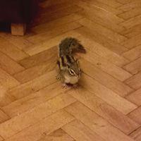 Az élet egy mókussal
