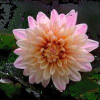 Virágzás