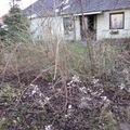Elhanyagolt kert rendbetétele - Az első lépések