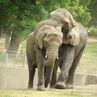 Elefántnász Nyíregyházán