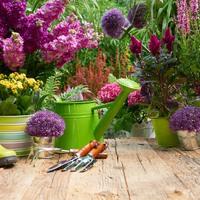 Lebegő bonszajok és buja kertek - Gardenexpo 2017