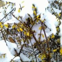 A hóolvadás után nagy lesz a futkosás a kertben