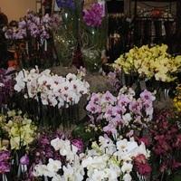 Programajánló: Őszi Orchidea és Bromélia Kiállítás