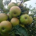 Itt a gyümölcstelepítés ideje