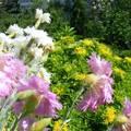 Téliesített balkonnövények, avagy dézsások bundában