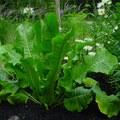 Torma – a kert tetőtől talpig hasznos lakója