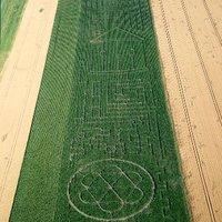 Útvesztő a kukoricásban