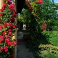 Ollóval a rózsák között