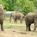 Elefántszuvenír - ajándék a növényeknek