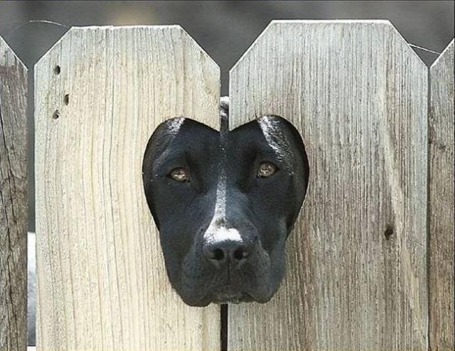 hund-am-zaun6848.jpg