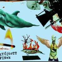 Komor Zoltán - Felgyújtott delfinek