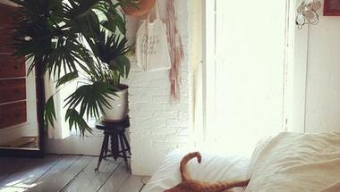 Kényelmes, bohém melegség - vidd a tavaszt az otthonodba!
