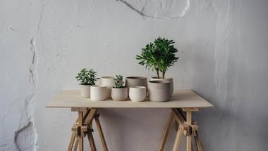Új trend: A nagyvárosi szobanövény-kertészkedés
