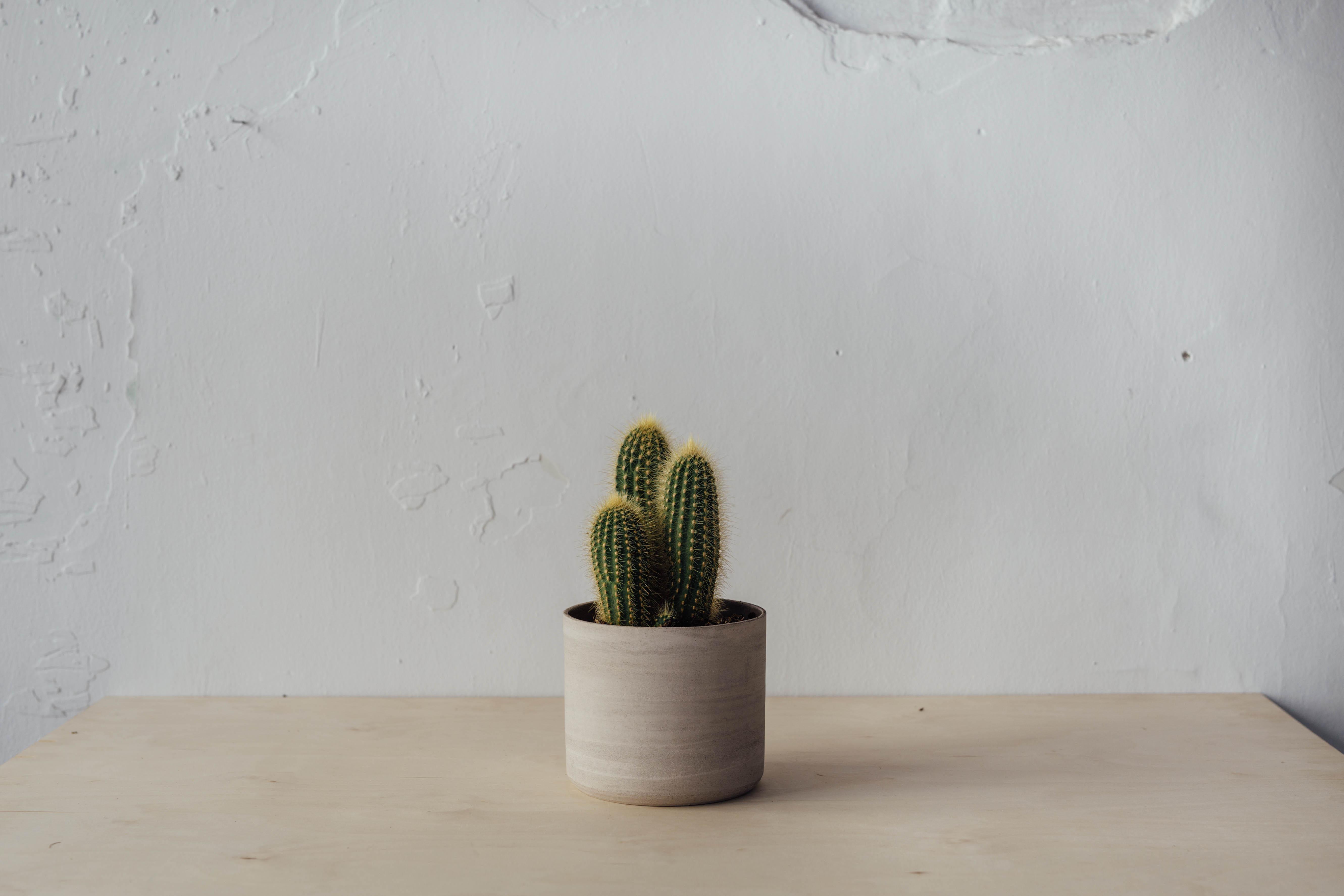 kezemura_wildflowerbar_kaspo_kaktusz.jpeg