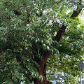 Papíreperfa a Vízivárosban